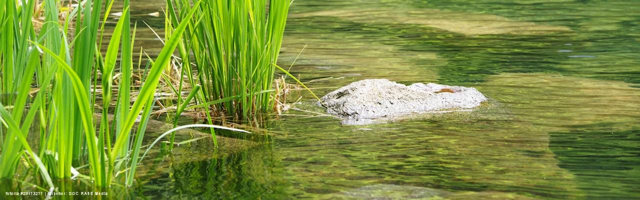 Sachverständiger Teich
