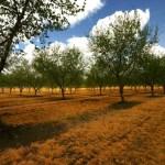 Έως 9.000 ευρώ εφάπαξ επιδότηση για φύτευση δένδρων με το νεο ΕΣΠΑ
