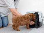 犬の「ハウス」のしつけ。効果的な練習方法は?