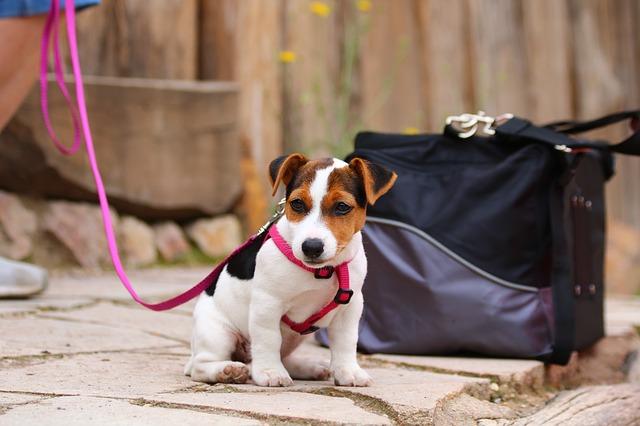 歩くのが怖くて散歩ができない子犬