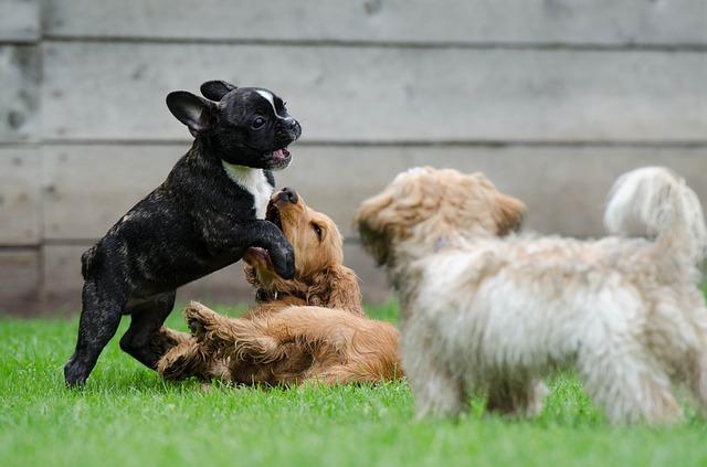 子犬の時期から仲良くしておきたい他の犬