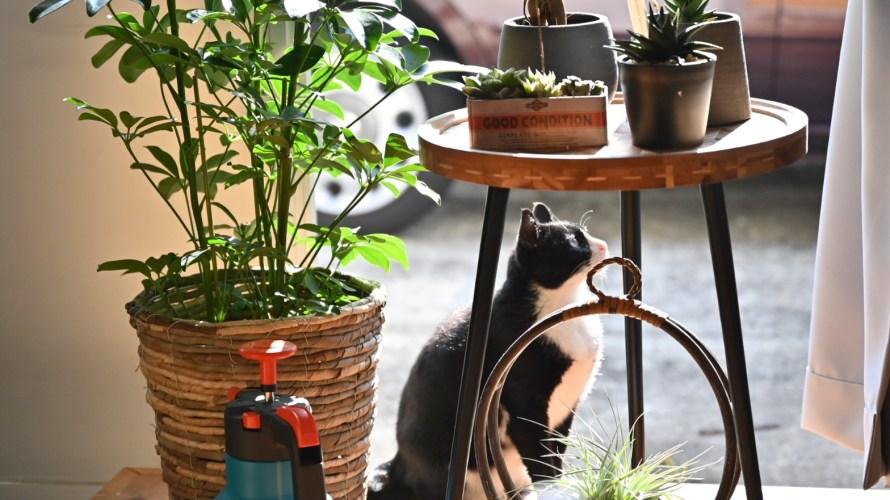 部屋に観葉植物を置いたら生活リズムが改善された話