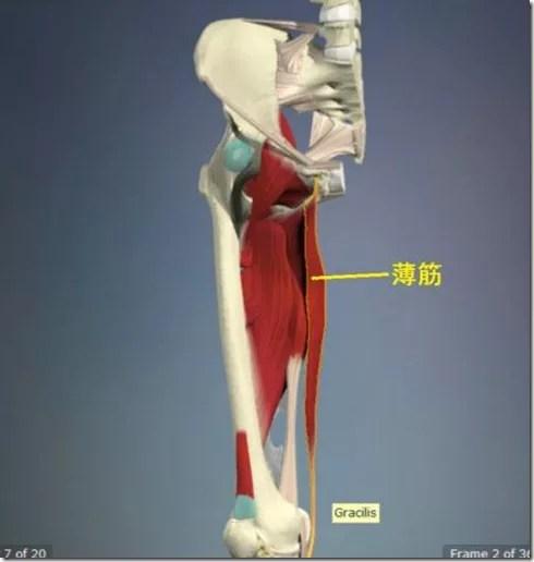 股関節痛み原因治療 薄筋4.5
