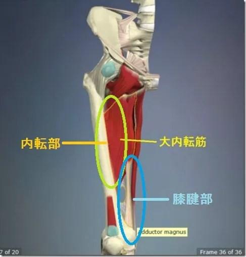 股関節痛み原因治療 大内転筋詳細4.5