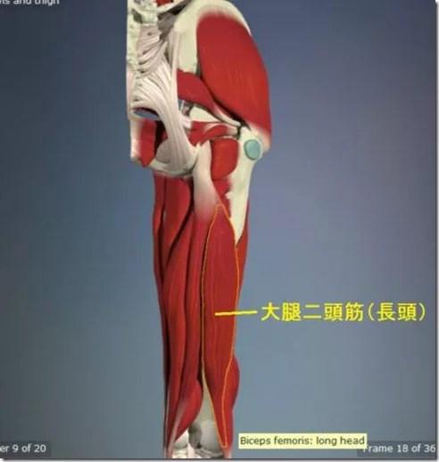 股関節痛み原因治療 大腿二頭筋(長頭)4.5