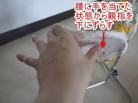 股関節の模型全体図4