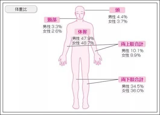 身体の各部位が体重に占める割合