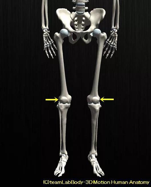膝蓋骨の解剖、その役割と可動性。お皿はどれぐらい動くのか?5