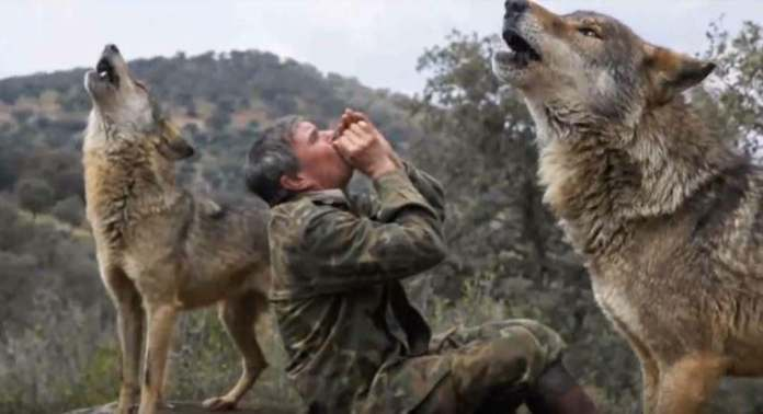 Man Raised By Wolves Says That He Is Disappointed By Human Life 4