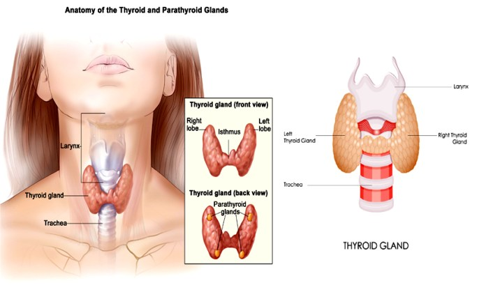 Health: 8 Nigerian Food That All Thyroid Patient Must Avoid 1