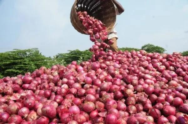 Onion marketer
