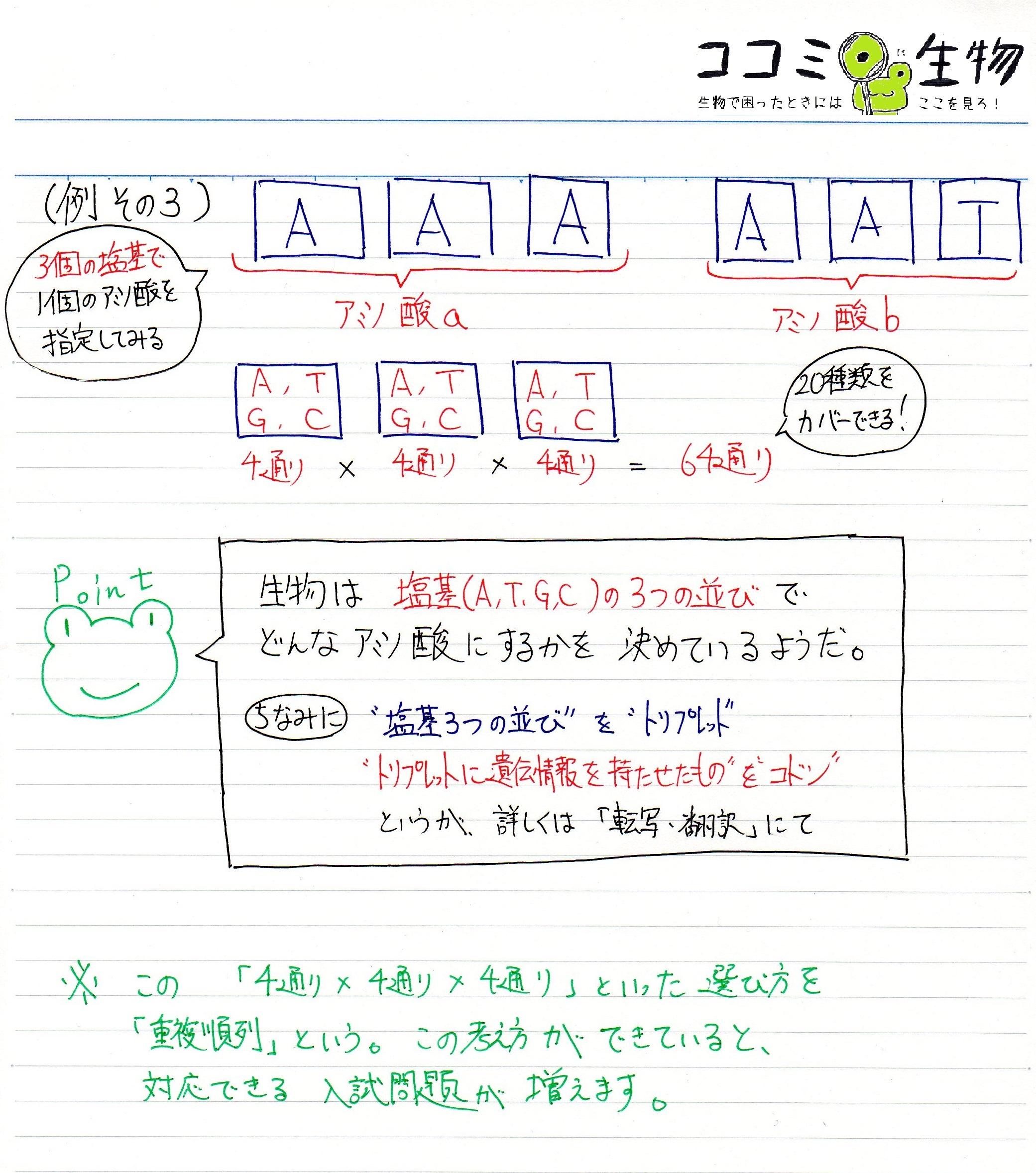 アミノ酸 コドン