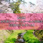 【必見】お花見のマナーとルールと攻略法【花見の小ネタにも】