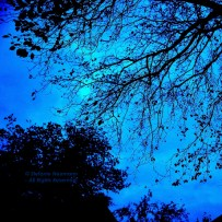 Blue Hour 3 © Stefanie Neumann - All Rights Reserved.