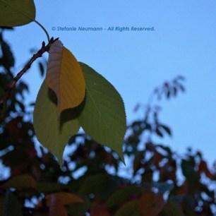 Evening Walk in Autumn 4 © Stefanie Neumann - All Rights Reserved.