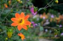 Autumn Stars 5 © Stefanie Neumann - All Rights Reserved.
