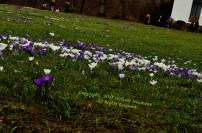 First Signs of Spring 1 © Stefanie Neumann - All Rights Reserved.