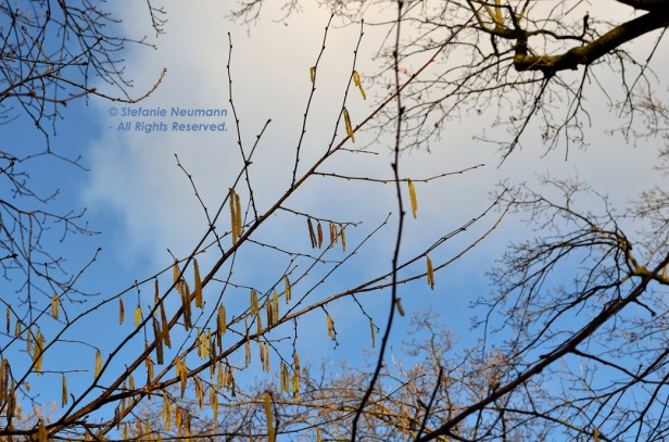 Ostara 2017 006 © Stefanie Neumann – Kokopelli Bee Free - All Rights Reserved; #KBFWalk #KBFPhotography