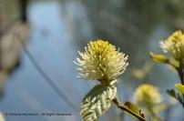 Wild Encounters LCA Osdorfer Feldmark 02 © Stefanie Neumann – Kokopelli Bee Free - All Rights Reserved; #KBFWalk #KBFPhotography