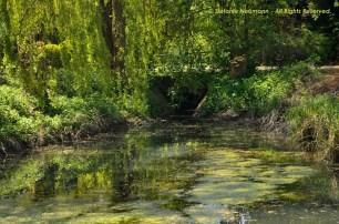 Wild Encounters LCA Osdorfer Feldmark 04 © Stefanie Neumann – Kokopelli Bee Free - All Rights Reserved; #KBFWalk #KBFPhotography