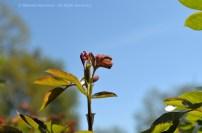 Wild Encounters LCA Osdorfer Feldmark 07 © Stefanie Neumann – Kokopelli Bee Free - All Rights Reserved; #KBFWalk #KBFPhotography