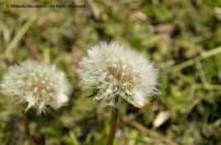 Wild Encounters LCA Osdorfer Feldmark 10 © Stefanie Neumann – Kokopelli Bee Free - All Rights Reserved; #KBFWalk #KBFPhotography