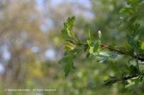 Wild Encounters LCA Osdorfer Feldmark 23 © Stefanie Neumann – Kokopelli Bee Free - All Rights Reserved; #KBFWalk #KBFPhotography