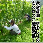 草むしり&家庭菜園のスゴイ健康効果とは?高齢者の健康維持に効果絶大な2つの理由!