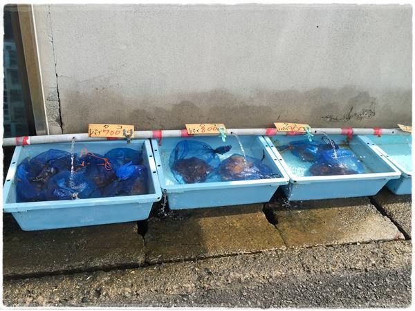 福水産タコ