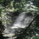 きれいな森林の画像