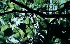 Trees - Tu B'shvat