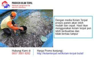 kolam ikan nila di rumah