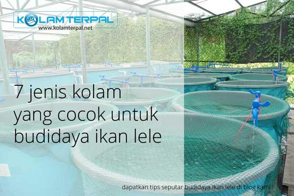 7-jenis-kolam-ikan-lele
