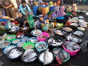 penjual-ikan-lele