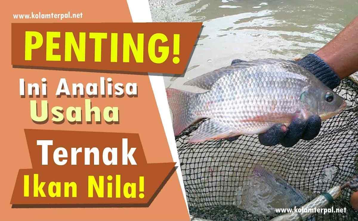 PENTING! Ini Analisa Usaha Budidaya Ikan Nila!