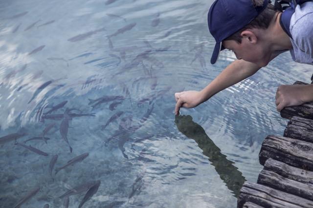 usaha budidaya ikan nila