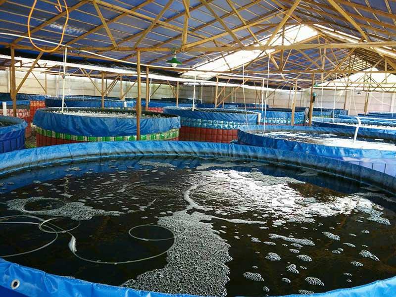 jual kolam terpal budidaya ikan lele fullset
