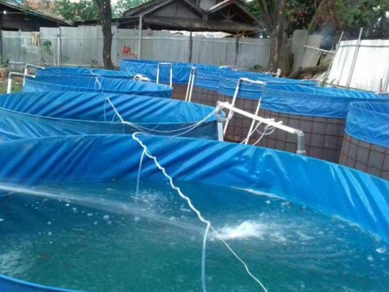 jual kolam terpal bulat