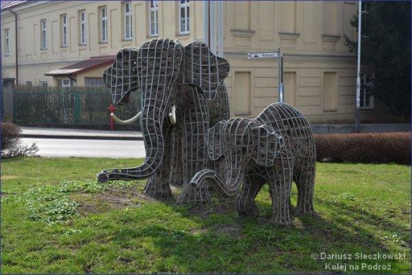 Słonie w Przeworsku