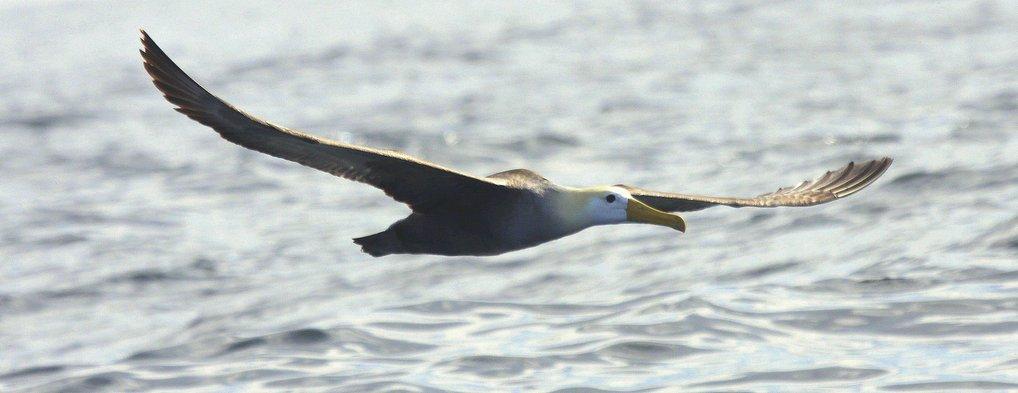 10 best birds of Lima pelagics