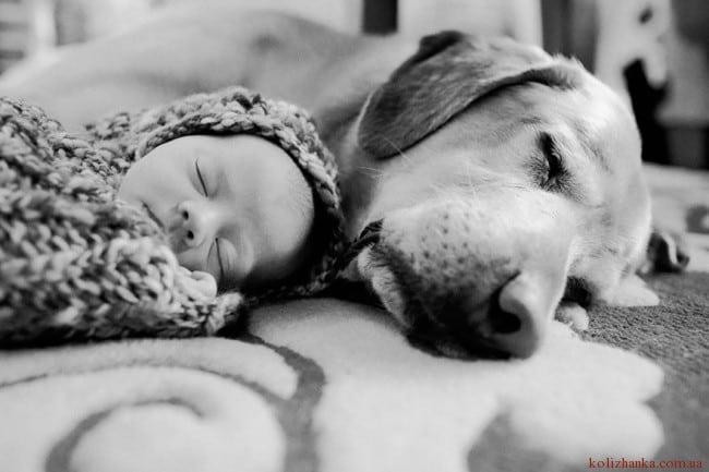 Маленькі діти і їх великі собаки. Фото
