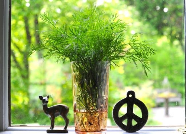 8 трав і прянощів, які легко виростити на кухні