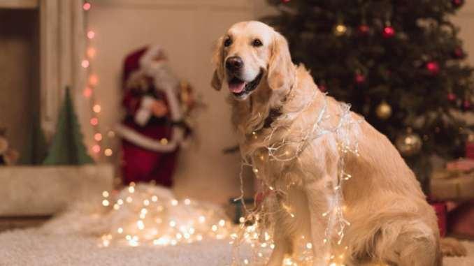 Новий рік 2018: як зустрічати, що одягнути і чого чекати від року Жовтої Собаки