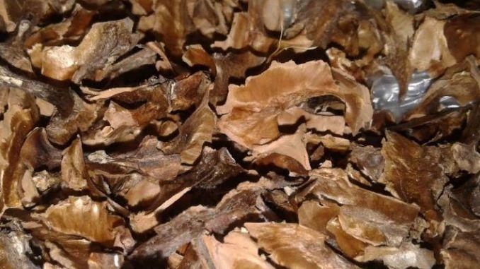 Перегородки волоського горіха: користь і шкода, лікувальні властивості