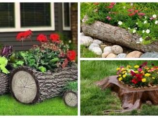 В умілих руках і пень зацвіте :) Цікаві ідеї для вашого саду (ФОТО)