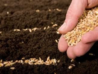 Выбираем семена для рассады: что следует знать