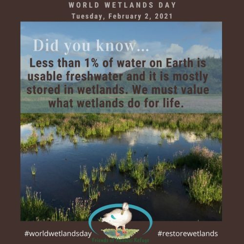 Text Graphic: Did you know: Less than 1% of water on Earth is usable freshwater and it is mostly stored in wetlands. We must value what wetlands do for life. Graphic was created the Friends of Hanalei Refuge for 2021ʻs World Wetlands Day.