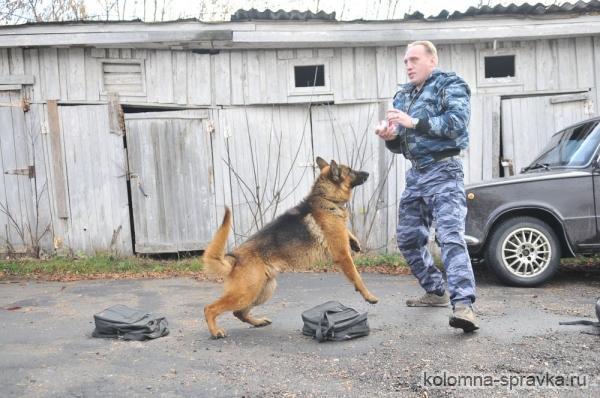 Коломна | Коломенские полицейские выстроили вольеры для ...