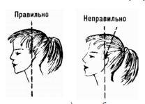 структура шейного отдела