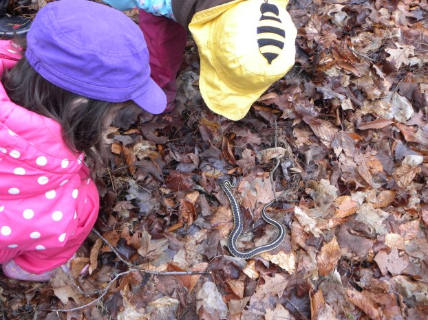 Garter snakes share our forest too!